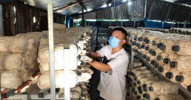 Nguồn vốn ủy thác địa phương phát huy hiệu quả tại Hàm Thuận Nam